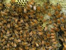 填装蜂蜜梳子的蜂 免版税库存照片