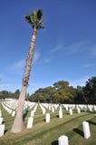 墓地墓碑palmtree 免版税库存照片