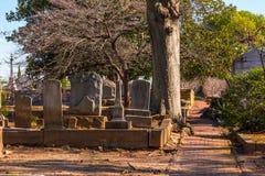墓碑、树和小径在奥克兰公墓,亚特兰大,美国 免版税库存照片