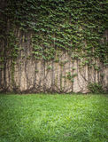 墙壁上升的植物 免版税库存照片