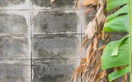 墙壁和叶子背景 免版税库存照片