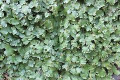 墙壁和叶子 免版税库存图片