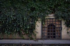 墙壁和常春藤 库存图片