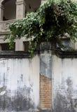 墙壁和植物 免版税库存图片