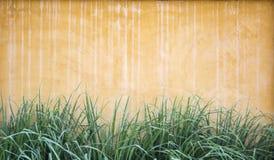 墙壁和草背景  库存照片