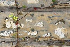 墙壁和藤- 34 免版税库存图片