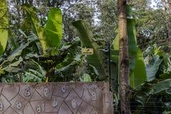 墙壁在度假旅馆里在坦桑尼亚 免版税图库摄影