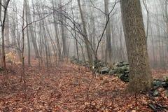 墙壁在有雾的森林 免版税库存照片