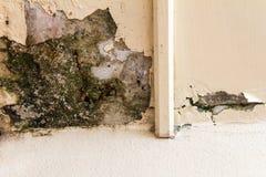 墙壁壁角朽烂 免版税库存图片