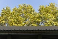 墙壁屋顶 免版税库存照片