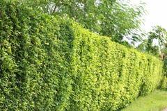 墙壁树 免版税库存照片