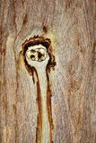 墙壁棕色木背景 库存图片