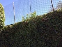 墙壁灌木蓝天 免版税库存图片