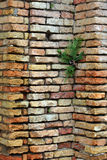 墙壁的工厂 免版税库存照片
