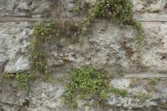 墙壁的纹理由大岩石做成 库存图片