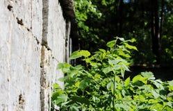 墙壁的纹理 著名Pudost石头鸣鸟公园 图库摄影