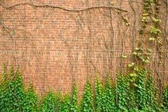 墙壁砖树 免版税库存图片
