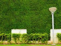 墙壁自然和白色混凝土和灯笼pilla绿色植物  免版税库存照片