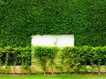 墙壁自然和milddle白色混凝土绿色植物在庭院里 库存图片