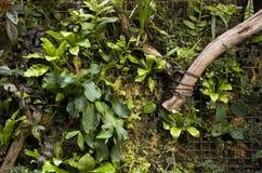 墙壁艺术品的植物 免版税库存图片