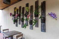 墙壁装饰的一些五颜六色的兰花花和类型在一家餐馆在Ubud,巴厘岛 免版税库存图片