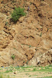 墙壁路线的攀岩运动员 库存图片