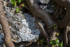 墙壁,石头,茎 Mentorella,拉齐奥,意大利圣所 库存照片