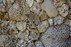 墙壁组成由不同的珊瑚 免版税库存图片
