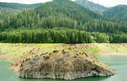 增加在北美的砍伐森林 免版税库存图片