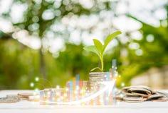 增加的金钱和兴趣browth长条图投资技术 免版税库存图片