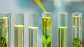 增加黄色液体的生物学家种植在管,对环境的人的冲击 影视素材