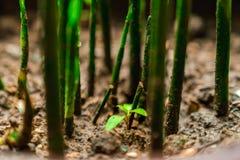 增长在土壤外面的绿色叶子 免版税库存照片
