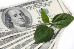 增长富有 免版税库存图片