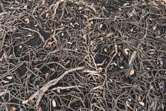 增长更大一棵大树的根 成长的概念 库存图片
