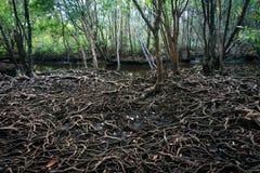 增长更大一棵大树的根 成长的概念 库存照片