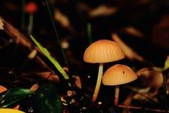 增长本质上的狂放的蘑菇 库存照片