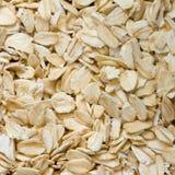 增长燕麦 免版税库存照片