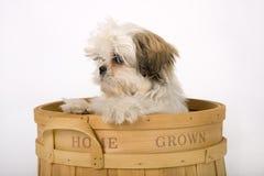 增长的家庭小狗 免版税库存照片