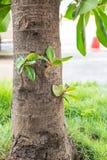 增长的树枝 库存图片
