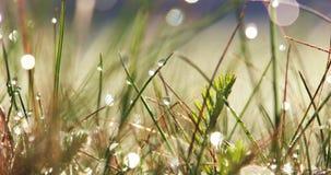 增长的自然-草 影视素材