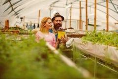 增长的花 增长的花概念 愉快的夫妇生长花 种植花的专业花匠 库存照片