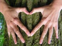 增长象爱护树木 免版税图库摄影