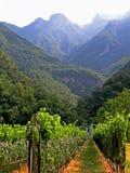 墨尔乐红葡萄酒透视图葡萄园 免版税库存照片