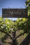 墨尔乐红葡萄酒 免版税库存图片