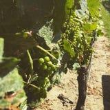 墨尔乐红葡萄酒 库存图片