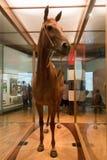 墨尔本博物馆Phar膝部 免版税图库摄影