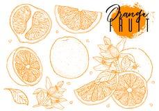 墨水手拉的套橙色果子 食物元素汇集 葡萄酒剪影 颜色概述 整个,半和被切的裂口图画  免版税库存图片