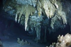 墨西哥人Cenote 库存图片