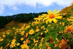 墨西哥人Sunflowe 图库摄影