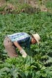 墨西哥农田劳工 图库摄影